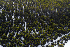 Aerial view of green forest Stock Photography