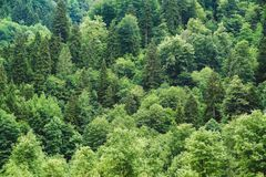 Aerial view green forest background, Rize, Turkey. Aerial view green forest background in Rize, Turkey Royalty Free Stock Images