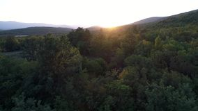 Aerial view of green forest mountains. Camera flying over beautiful forest landscape at golden hour time stock video footage