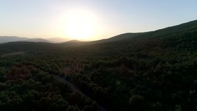 Aerial view of green forest mountains. Camera flying over beautiful forest landscape at golden hour time stock footage
