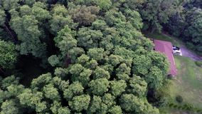 Aerial view of green forest treetops from above in air plane flight. Residential houses in dense forest from above overhead aerial view stock footage