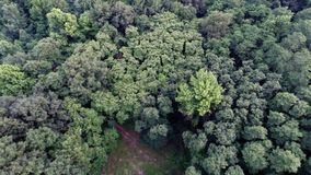 Aerial view of green forest treetops from above in air plane flight. Forest top view aerial trees and branches stock footage
