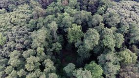 Aerial view of green forest treetops from above in air plane flight. Forest top view aerial trees and branches stock video footage