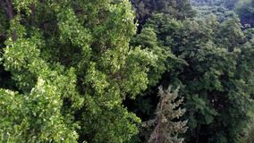Aerial view of green forest treetops from above in air plane flight stock footage
