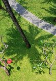 Aerial view of green lawn and walkway Stock Photography