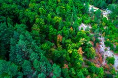 Aerial view of green pine trees in forest in high mountains land. Scape in Bulgaria Stock Photo