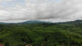 Aerial view of the green rainforest jungle in Asia. stock video footage