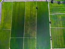 Aerial view of green rice farms in Phichit, Thailand royalty free stock photography