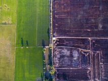 Aerial view of green rice farms and uncultivated land. Aerial view of green rice farms and brown uncultivated land Royalty Free Stock Photo