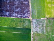 Aerial view of green rice farms and uncultivated land. Aerial view of green rice farms, uncultivated land and small dirt roads Royalty Free Stock Image