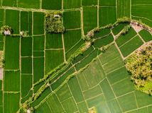 Aerial view of green rice fields. Nature in Bali stock images