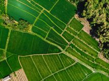Aerial view of green rice fields. Natural texture in Bali. Island stock images