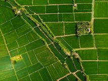 Aerial view of green rice fields. Nature in Bali island. Aerial view of green rice fields. Nature in Bali royalty free stock images