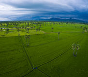 Aerial view of green rice paddy planting field in petchaburi pro Royalty Free Stock Images