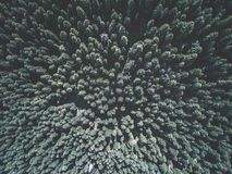 Aerial view of green spruce forest Stock Image