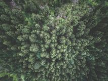 Aerial view of green spruce forest Stock Photos