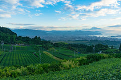 Aerial view of green tea plantations and Shizuoka city. Aerial view of fresh tea plantation with Shizuoka city and mountains on the background. Japanese urban Stock Photos