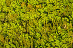 Aerial view of green trees forest  in quebec Royalty Free Stock Image