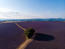 aerial view of green trees growing on lavender field and mountains in distance stock images