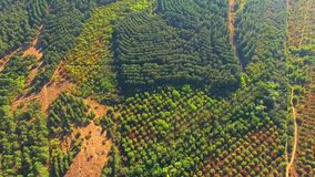 AERIAL VIEW. Green Wood In Large Valley stock video