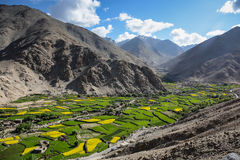Aerial view of green and yellow field in valley of Ladakh, India Stock Photography