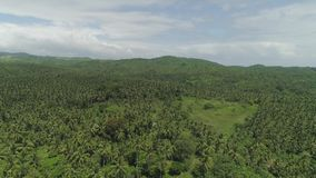 Tropical landscape with palm trees. Philippines, Luzon. Aerial view of grove of palm trees in the hills against sky and clouds. Hills covered with green stock video