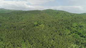 Tropical landscape with palm trees. Philippines, Luzon. Aerial view of grove of palm trees in the hills against sky and clouds. Hills covered with green stock video footage