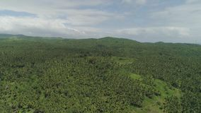 Tropical landscape with palm trees. Philippines, Luzon. Aerial view of grove of palm trees in the hills against sky and clouds. Hills covered with green stock footage