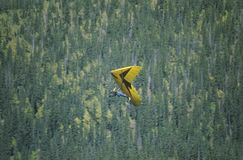 Aerial view of Hang Glider Stock Images
