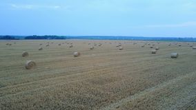 Aerial View Of Harvest Field. Aerial view of hay bales on harvest field stock video footage