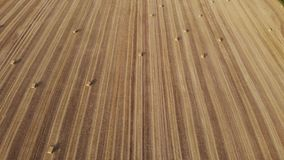 Aerial view on harvest field, square straw bales, straight ahead, view at an angle stock footage