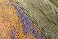 Aerial view of the harvest fields  morning landscape Stock Image