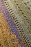 Aerial view of the harvest fields  morning landscape Royalty Free Stock Images