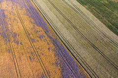 Aerial view of the harvest fields  morning landscape Royalty Free Stock Photos