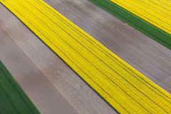 Aerial view of harvest fields Royalty Free Stock Image