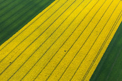 Aerial view of harvest fields Stock Photography