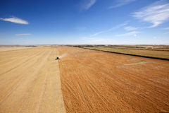 Aerial View of Harvesting. Aerial view of a combine harvesting lentils on the open prairie Royalty Free Stock Image
