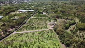 Aerial view Hawaii vegetation stock footage