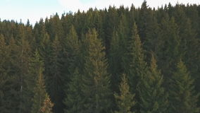 Aerial view from the height of the village near a forest. View from the height of the village near a forest,shot from a quadcopter,aerial photography,shot from a stock video footage
