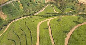 Aerial view of hills with tea plantation in morning in Sri Lanka. stock footage