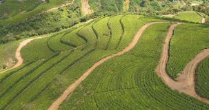 Aerial view of hills with tea plantation in morning in Sri Lanka. stock video footage