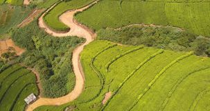 Aerial view of hills with tea plantation in morning in Sri Lanka. stock video