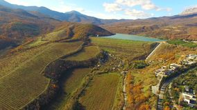AERIAL VIEW. Hilly Terrain With Grape Fields stock video