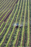 Aerial view of in his vineyard working wine farmer Stock Photography