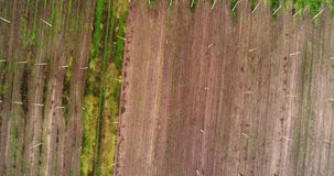 Aerial view on hops field. Field of hops after harvesting. stock video footage