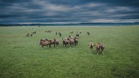 Aerial view of horse herd stock photos