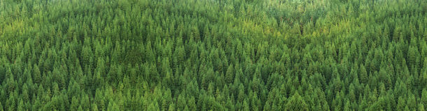 Aerial view of huge green healthy pine forest, panorama texture. Aerial view of huge green fresh healthy spruce tree forest growing panorama texture background Stock Image