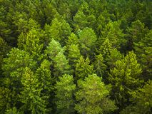 Aerial view of the forest stock photos