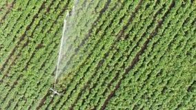 Aerial view: Irrigation sprinklers in the field. stock video footage