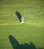 Aerial View : Isolated tree in a field. With his shadow Stock Photo